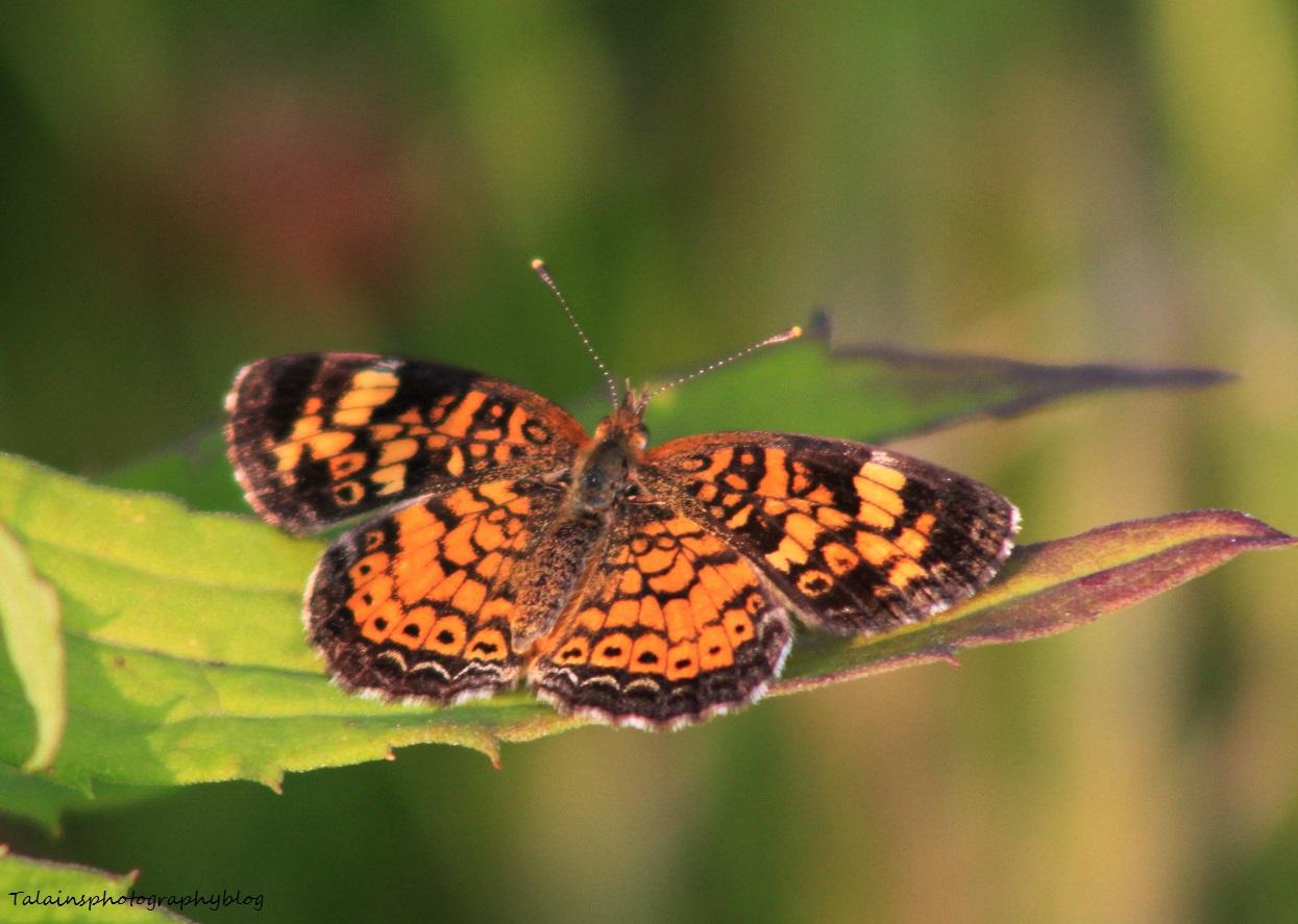 Butterfly 040