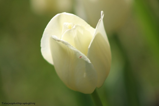 Flowers 176