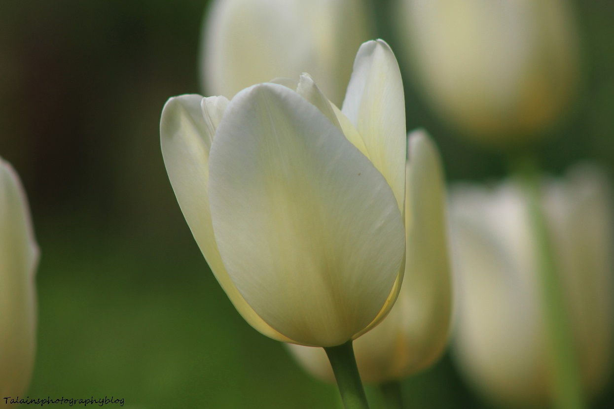 Flowers 195