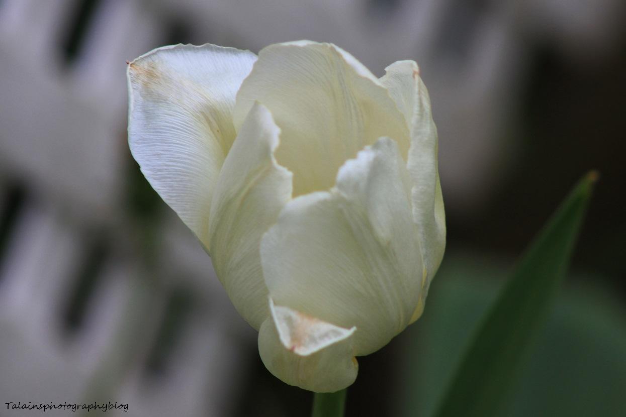 Flowers 201