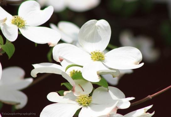 Flowers 206