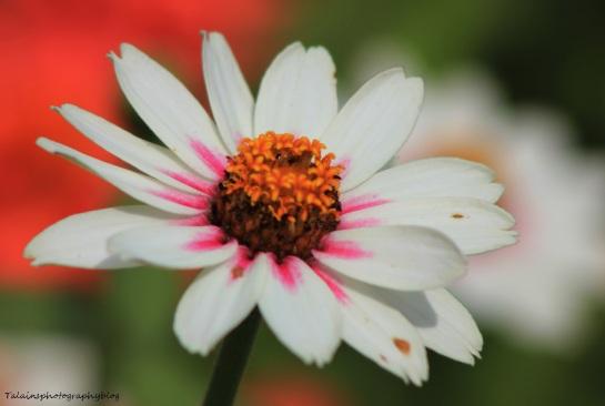 Flowers 362