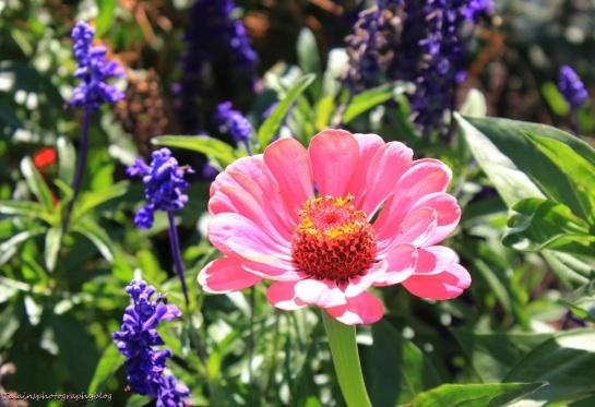 Flowers 468