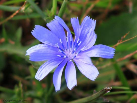 Flowers 476