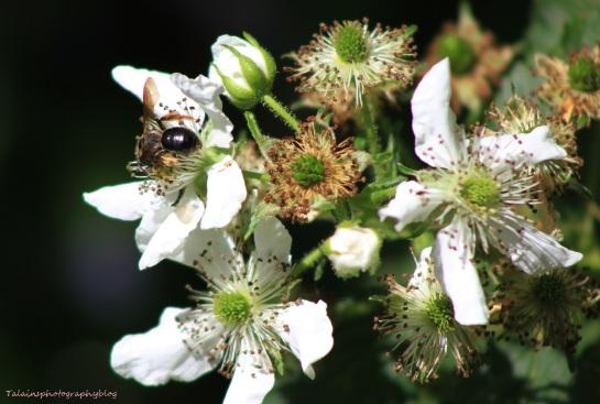 Flowers 261