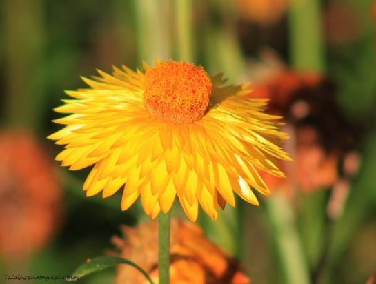 Flowers 472