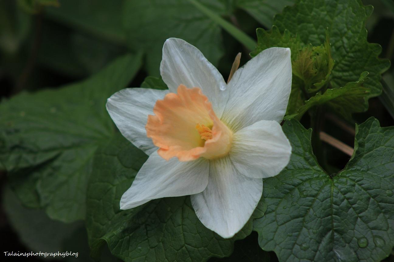 Flowers 052