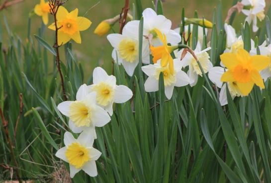 Flowers 068