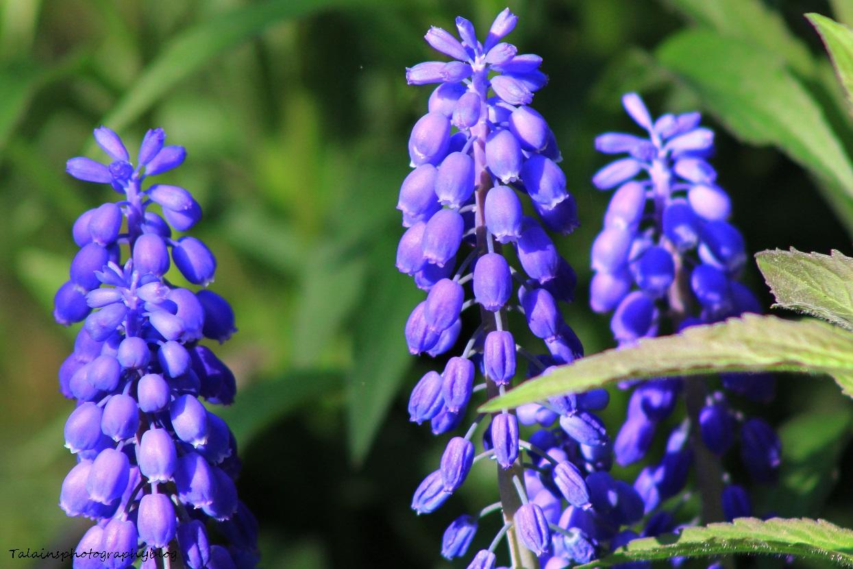 Flowers 142