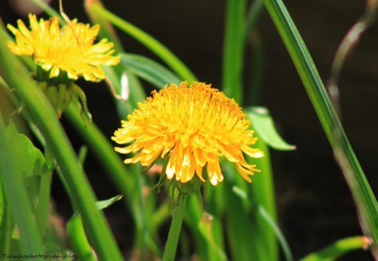 Flowers 161