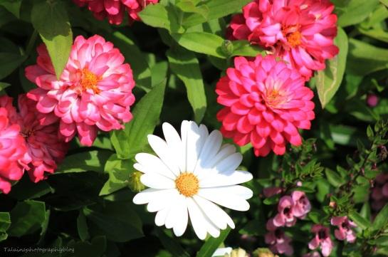 Flowers 356