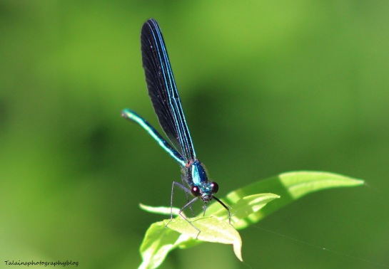 Insects 010