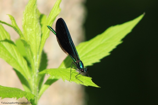 Insects 011