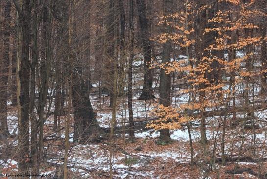 woods 001