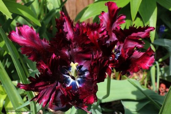 Flower 046