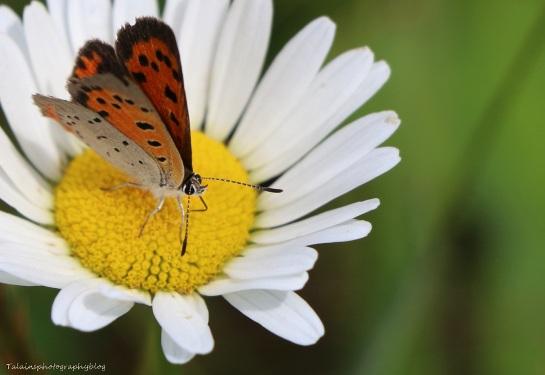 Butterfly 042