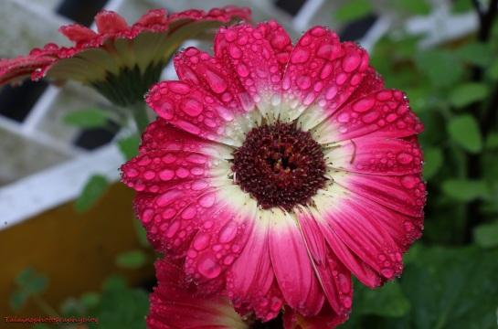 Flower 060
