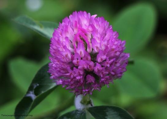 Flower 071