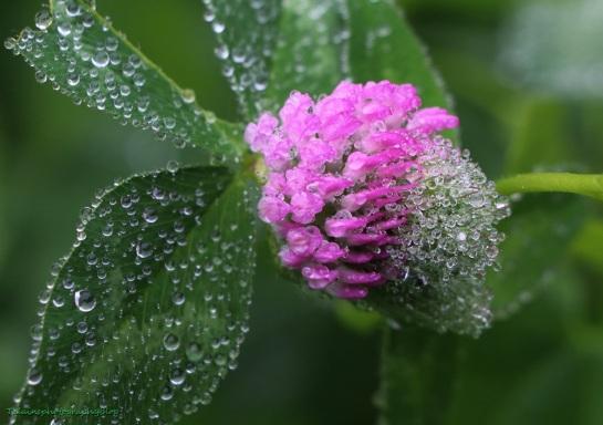 Flower 075