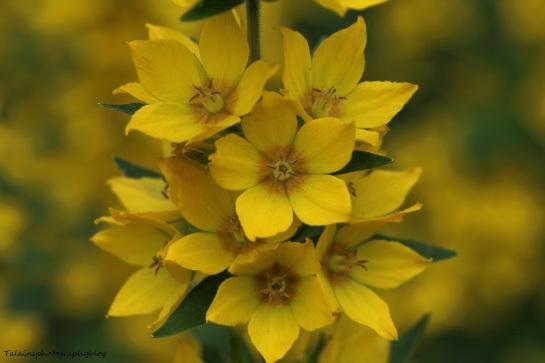 Flower 109