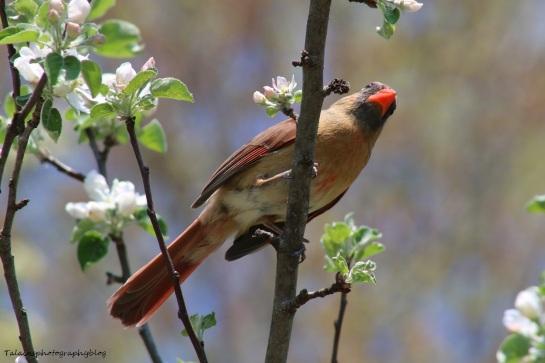 Cardinal 008