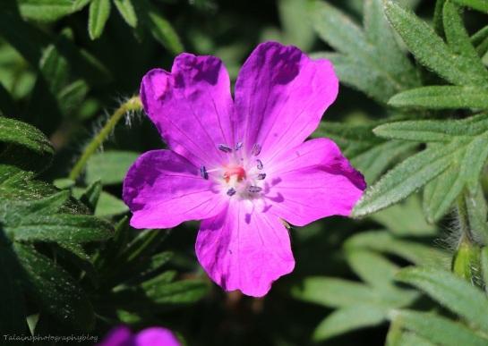 Flower 064