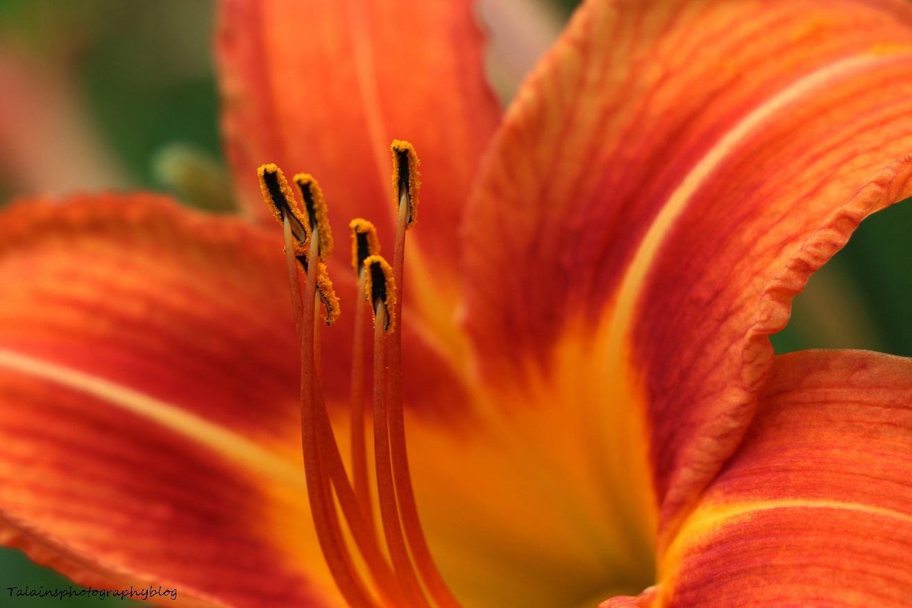 Flower 106