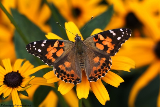 Butterfly 124