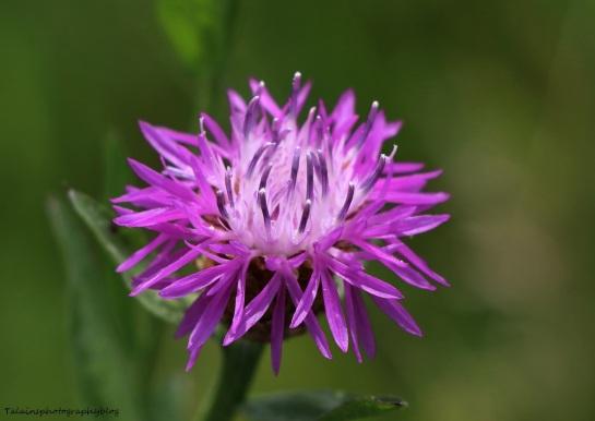 Flower 092
