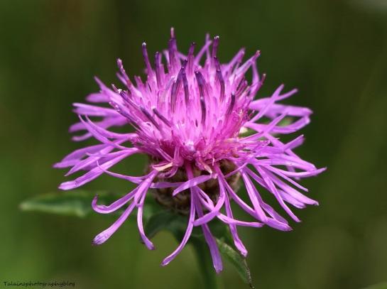 Flower 097X