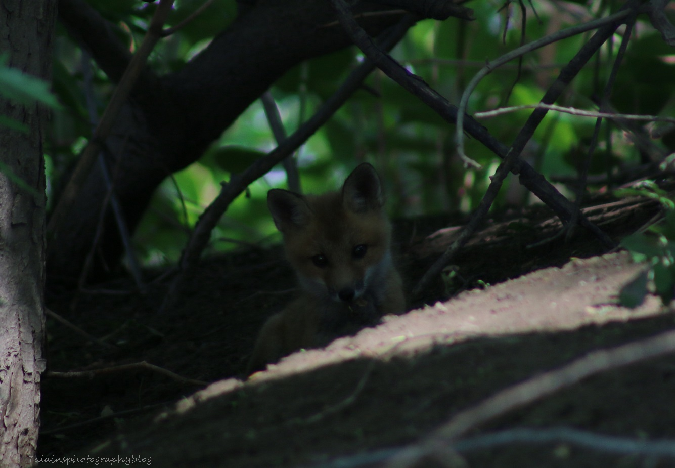 Fox 05