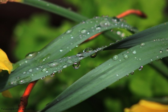 water droplets 002