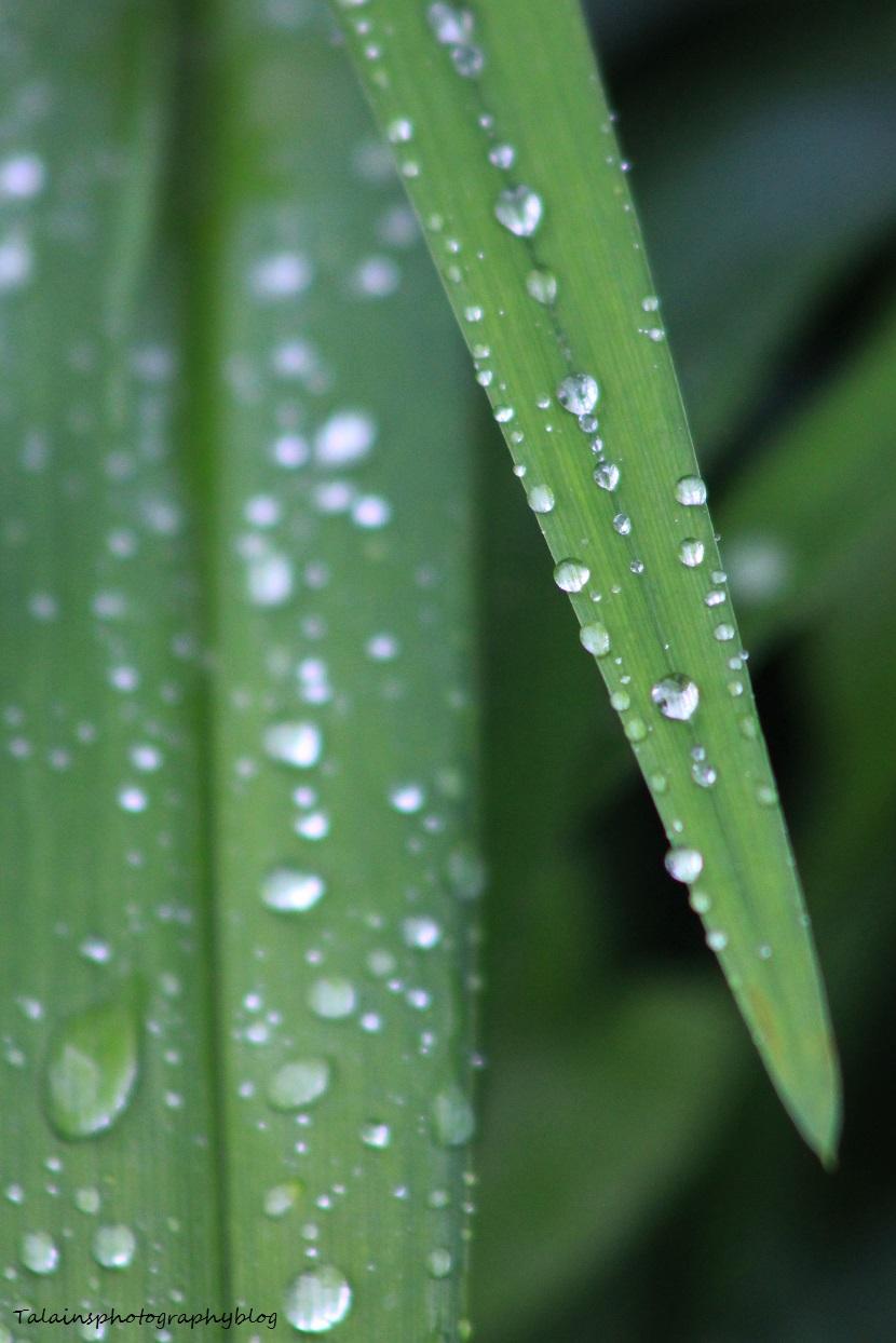 waterdrops02