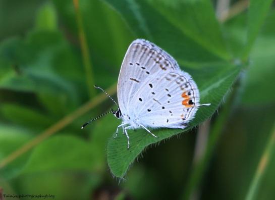 Butterfly 072