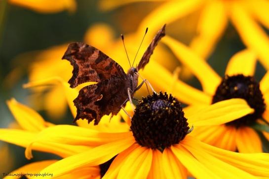 Butterfly 131