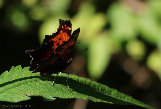 Butterfly 142