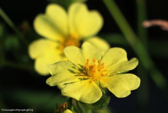Flower 121