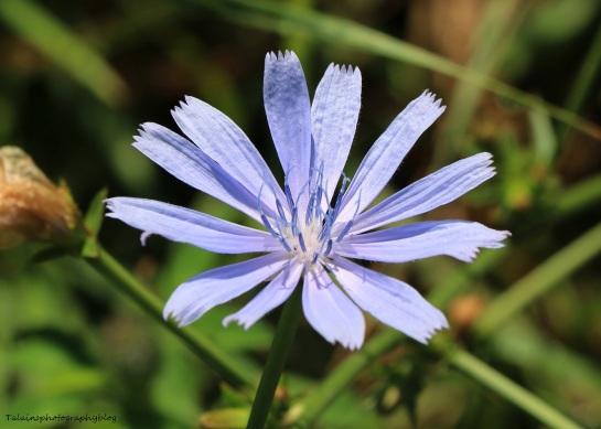Flower 134