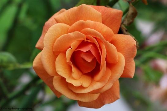 Flower 191