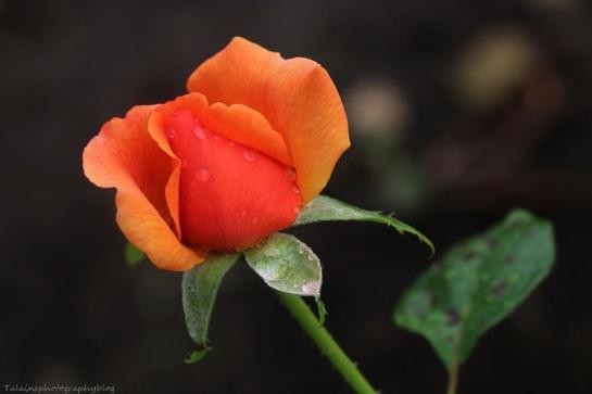Flower 208