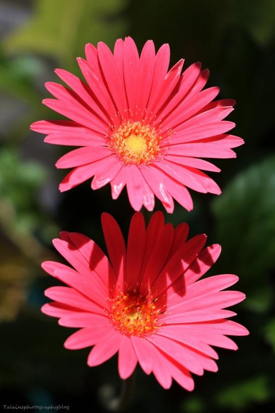 Flower 219