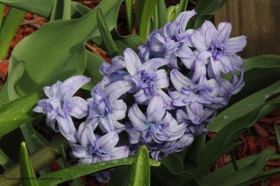 Flowers 106