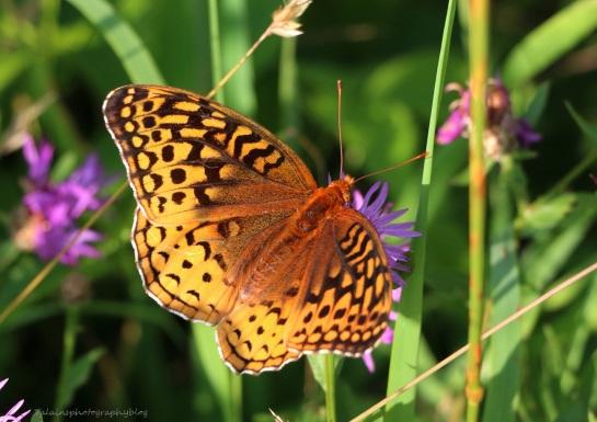 Butterfly 076