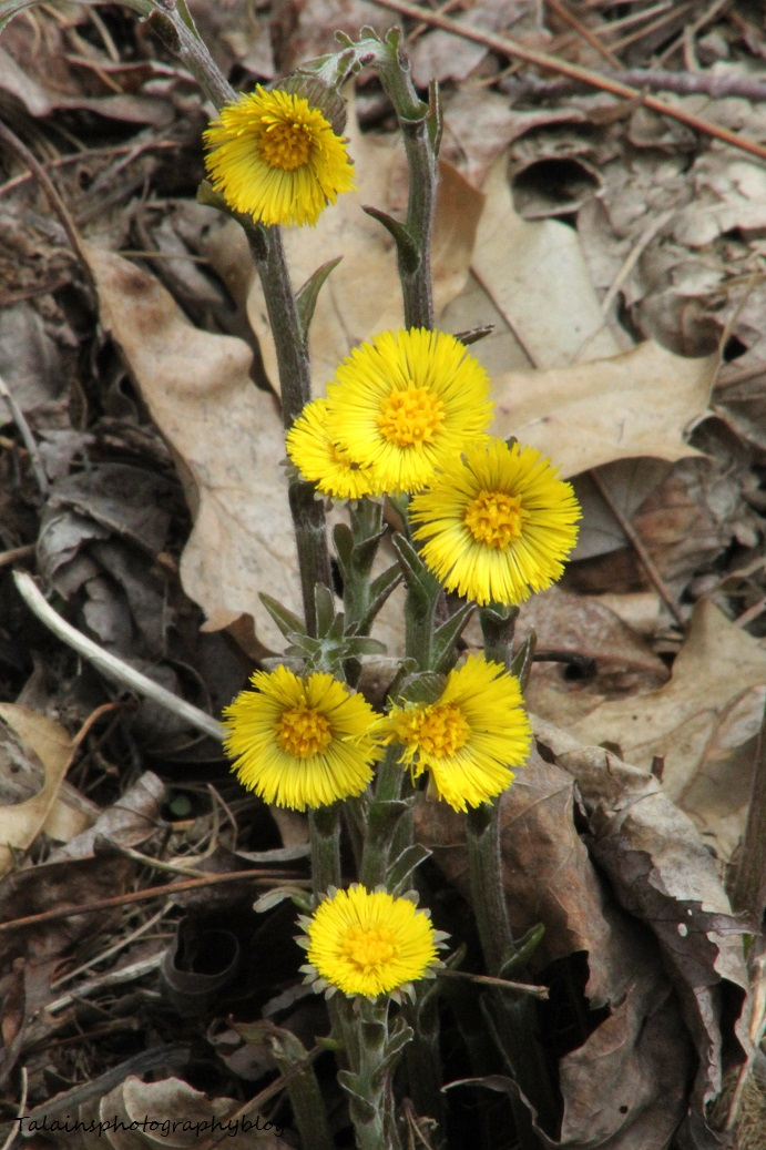 Flowers 092