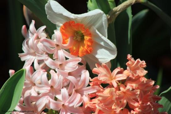 Flowers 156