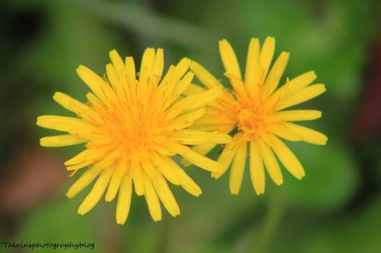 Flowers 203