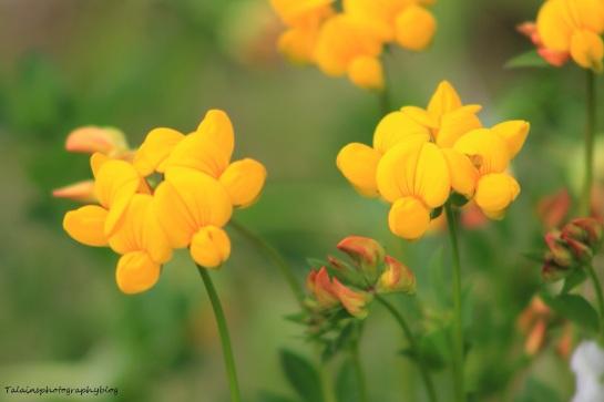 Flowers 220