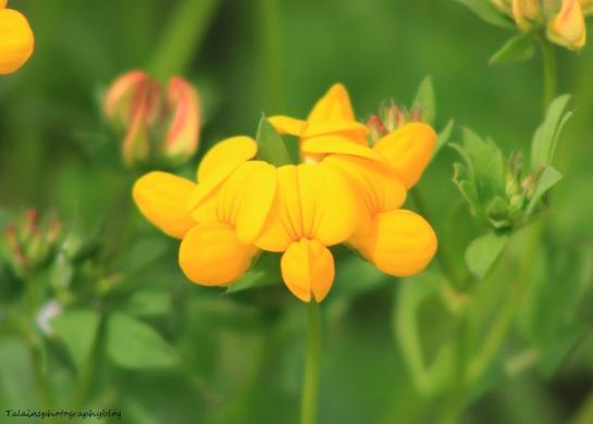 Flowers 221