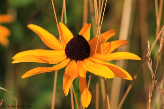 Flowers 321