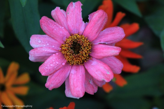 flowers339